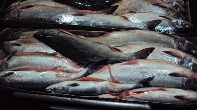 Уровень рыбного вылова увеличивают в Приморском крае