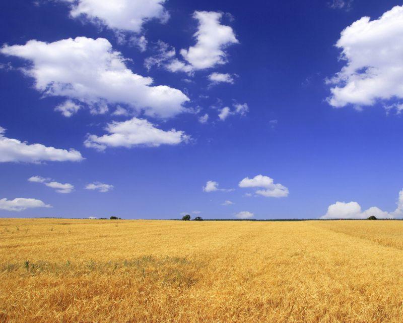 В Дивеевском районе прошел день поля.