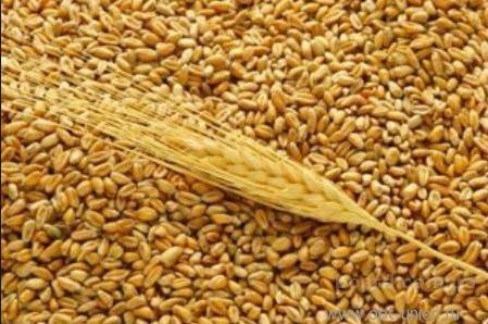 «По прогнозам аграриев, в 2016 году урожай зерновых в регионе будет богаче, чем в прошлом году», - Валерий Шанцев