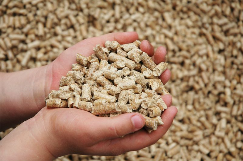 Качественный корм увеличивает молокопроизводство