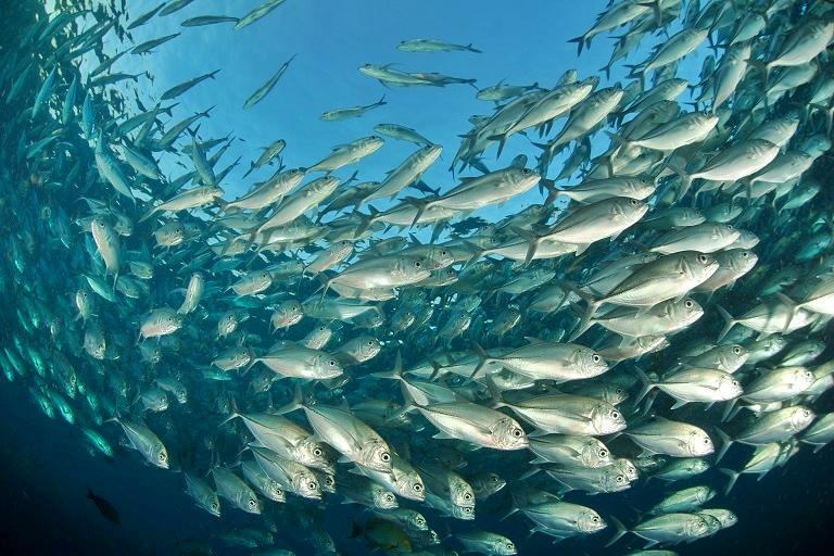 Рыбоводство Нижегородской области: перспективы развития