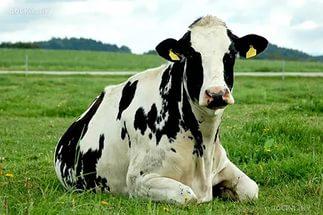 АО «Ильино-Заборское» получил в распоряжение молочный комплекс на 408 голов для крупного рогатого скота